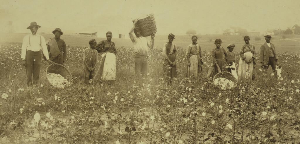 Enslaved men, women, and children, picking cotton